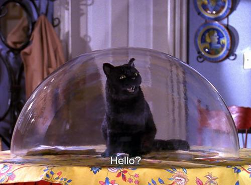 This week's requisite Salem